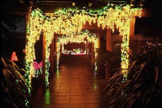 Bellevue botanical garden quot garden d lights quot